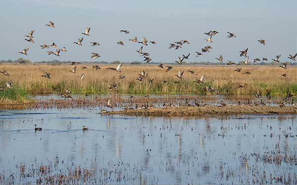 Birds flying over wetlands